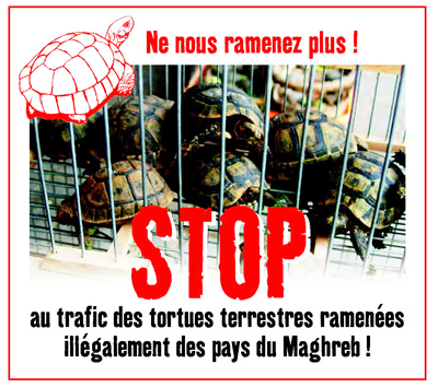 STOP Trafic tortues